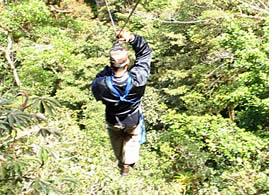 In the best Zip Line Canopy Tour in Panama you glide high above the forest from one tree to another in the Palo Alto region of Boquete